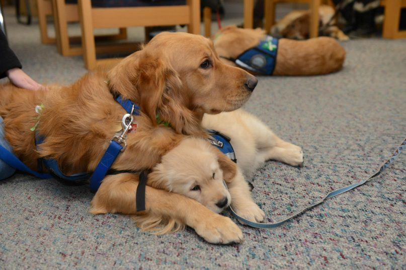 Hi resolution version of RNS-COMFORT-DOGS010412a.jpg