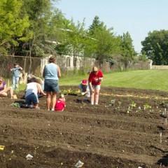 Volunteers harvest at Holy Name Church in Cedar Lake, Ind. Photo by Debra Rubin
