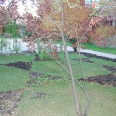 The Star of David garden at KAM Isaiah Israel in Chicago. Photo courtesy Robert Nevel/KAM