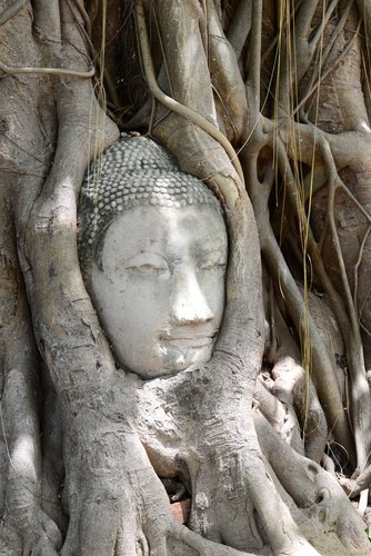 An photograph of a Bodhi tree with a Buddha statue.