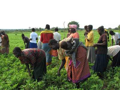 Farmers and war widows tend peanut plants in Uganda. The seeds were provided by Catholic Relief Services as religious leaders of all stripes take the lead in promoting reconciliation in the war-torn country. Religion News Service photo courtesy Debbie DeVoe/CRS