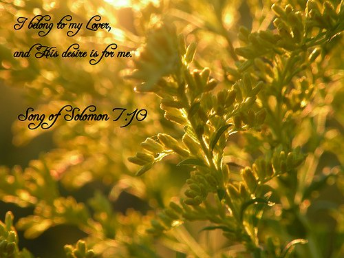 Song of Solomon 7:10 - Photo by Sapphire Dream Photography via Flickr (http://bit.ly/1aD6cqt)