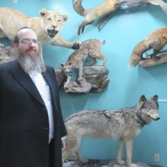 Rabbi Shaul Shimon Deutsch poses for a portrait with some of the predatory animals in his Living Torah Museum. RNS photo by David Gibson