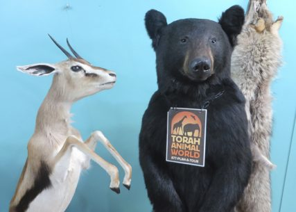 A gazelle and bear are on display at the Living Torah Museum in Brooklyn, New York. RNS photo by David Gibson