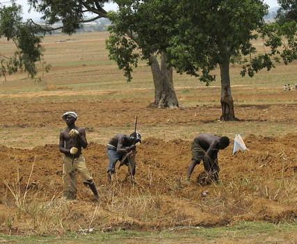 Nigerian farmers working in field in Middle Belt.
