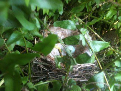 Bird's nest in potted fern. Photo courtesy Rachel Marie Stone, 2014.