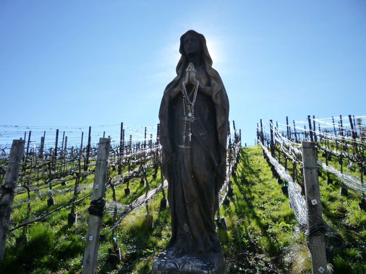 """""""Our Lady of the Grapes"""" overlooks the Trinitas Winery vineyard in Napa Valley. Religion News Service photo by Kimberly Winston"""