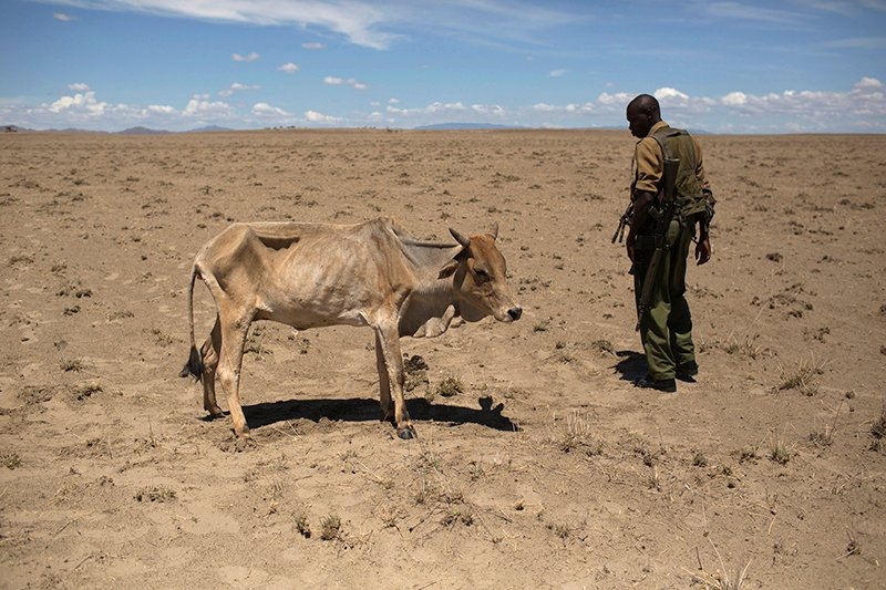 A Kenyan soldier from the Rapid Deployment Unit, an emergency response unit who were deployed due to reoccurring clashes and killings between Turkana and Dhaasanac communities, looks at a cow which is dying from hunger, a few hundred meters from the official boundary of the Kenya-Ethiopia border in northwestern Kenya on October 13, 2013. Photo courtesy of REUTERS/Siegfried Modola *Editors: This photo may only be republished with RNS-KENYA-CATHOLIC, originally transmitted on March 10, 2015.