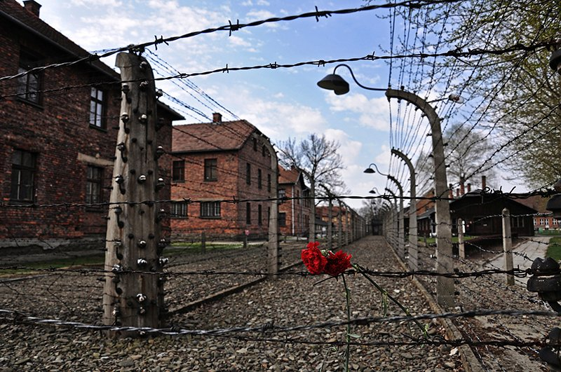 Carnations are placed on the barbed wire in the former Nazi death camp of Auschwitz in Oswiecim, on April 16, 2015. Photo courtesy of REUTERS/Lukasz Krajewski/Agencja Gazeta