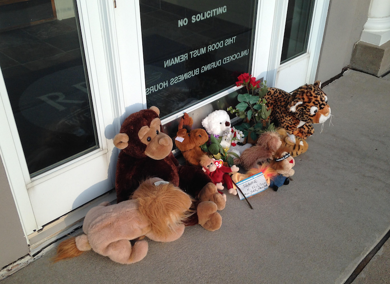 Stuffed animals left by protesters block the doorway of River Bluff Dental clinic in Bloomington, Minn., after the killing of a famous lion in Zimbabwe, July 28, 2015. Wildlife officials on Tuesday accused an American hunter of killing Cecil, one of the oldest and most famous lions in Zimbabwe, without a permit after paying $50,000 to two people who lured the beast to its death. The lion was lured out of Hwange National Park using a bait and was shot by dentist Walter James Palmer. Photo courtesy REUTERS/David Bailey