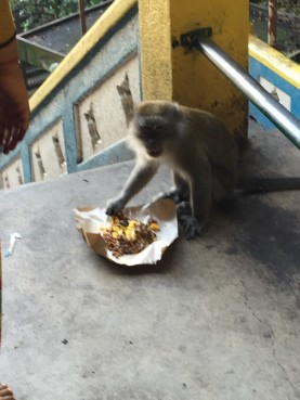 Some worshippers purchased food from the temple priests and gave it to the monkeys as an offering