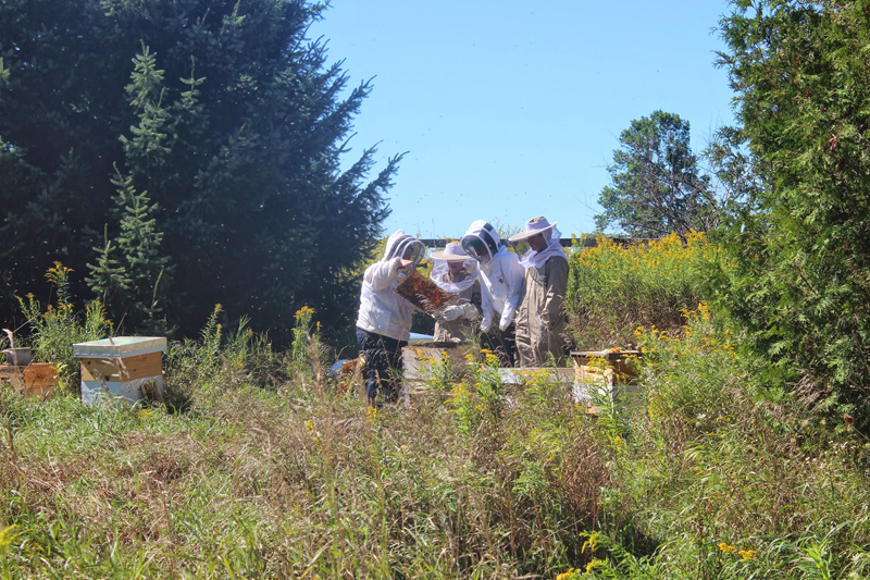 Bee keepers tend to the bees at Bela Farm, west of Toronto. Photo courtesy of Lisa Borden