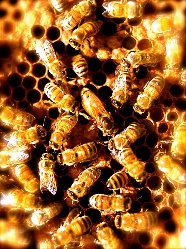 Jewish beekeepers sweeten New Year, teach wisdom of the hive