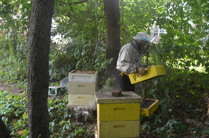 A bee keeper tends to Avraham and Nechama Laber's honeybees. Photo courtesy of Chana Laber