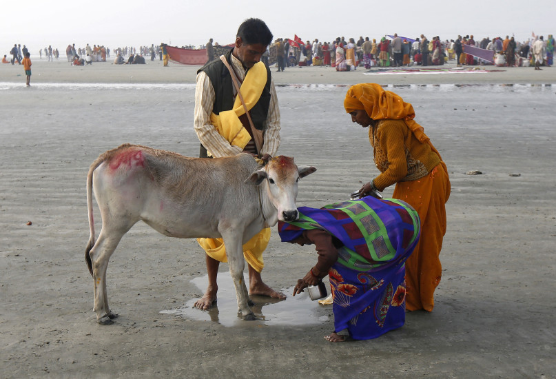 """Hindu pilgrims seek blessings from a cow after taking a dip at the confluence of the river Ganges and the Bay of Bengal, ahead of the """"Makar Sankranti"""" festival at Sagar Island, south of Kolkata, India, January 14, 2016. REUTERS/Rupak De Chowdhuri."""