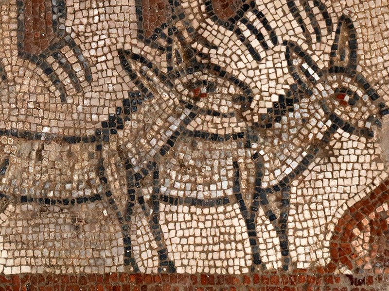 Two donkeys in the Noah's Ark mosaic discovered in June by archaeologists. Photo courtesy of Jim Haberman