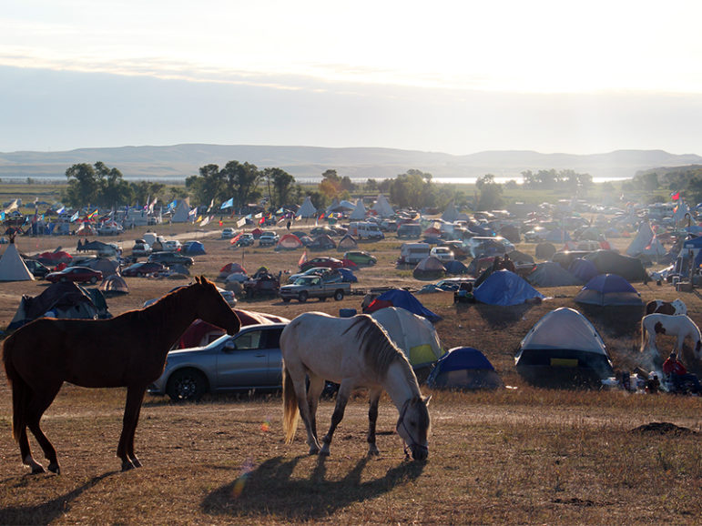 Horses graze early on the morning of Sept. 14, 2016, at the Oceti Sakowin camp near the Standing Rock Reservation in North Dakota, where people camped in solidarity with the Standing Rock Sioux Tribe in opposition to the Dakota Access Pipeline project. RNS photo by Emily McFarlan Miller