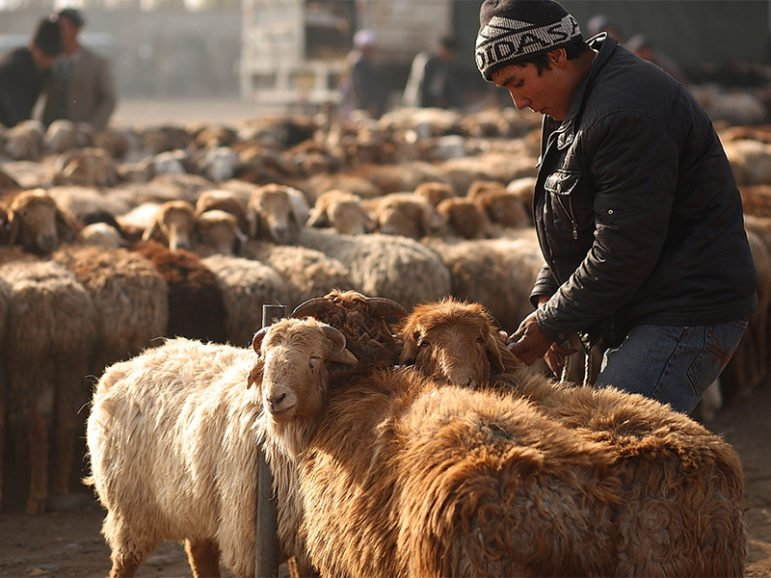A man leads livestock at a bazaar in Central Asia's Kashgar region on Nov 7, 2010, 10 days before of Eid al-Adha. Photo courtesy of Keith Tan via Creative Commons 2.0
