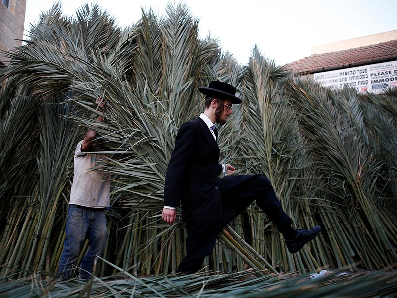 An ultra-Orthodox Jewish man walks by palm branches used to cover a ritual booth known as a sukkah during the upcoming Jewish holiday of Sukkot in Jerusalem's Mea Shearim neighbourhood, on October 13, 2016. Photo courtesy of Reuters/Amir Cohen