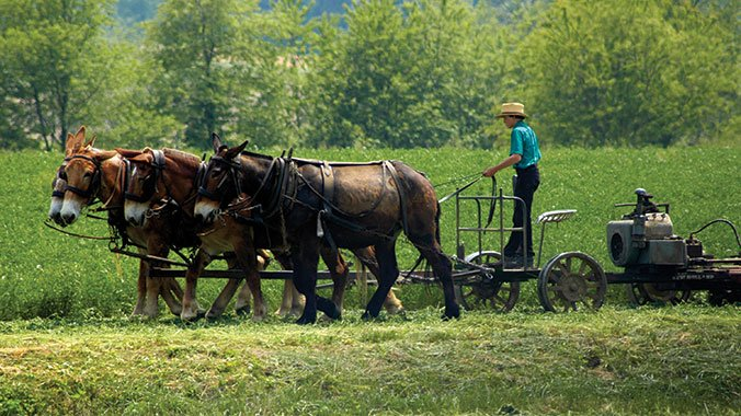Learn the story of the religious communities of Lancaster County, where you'll visit historic homes, hear engaging lectures and speak with members of an Old Order Amish family.