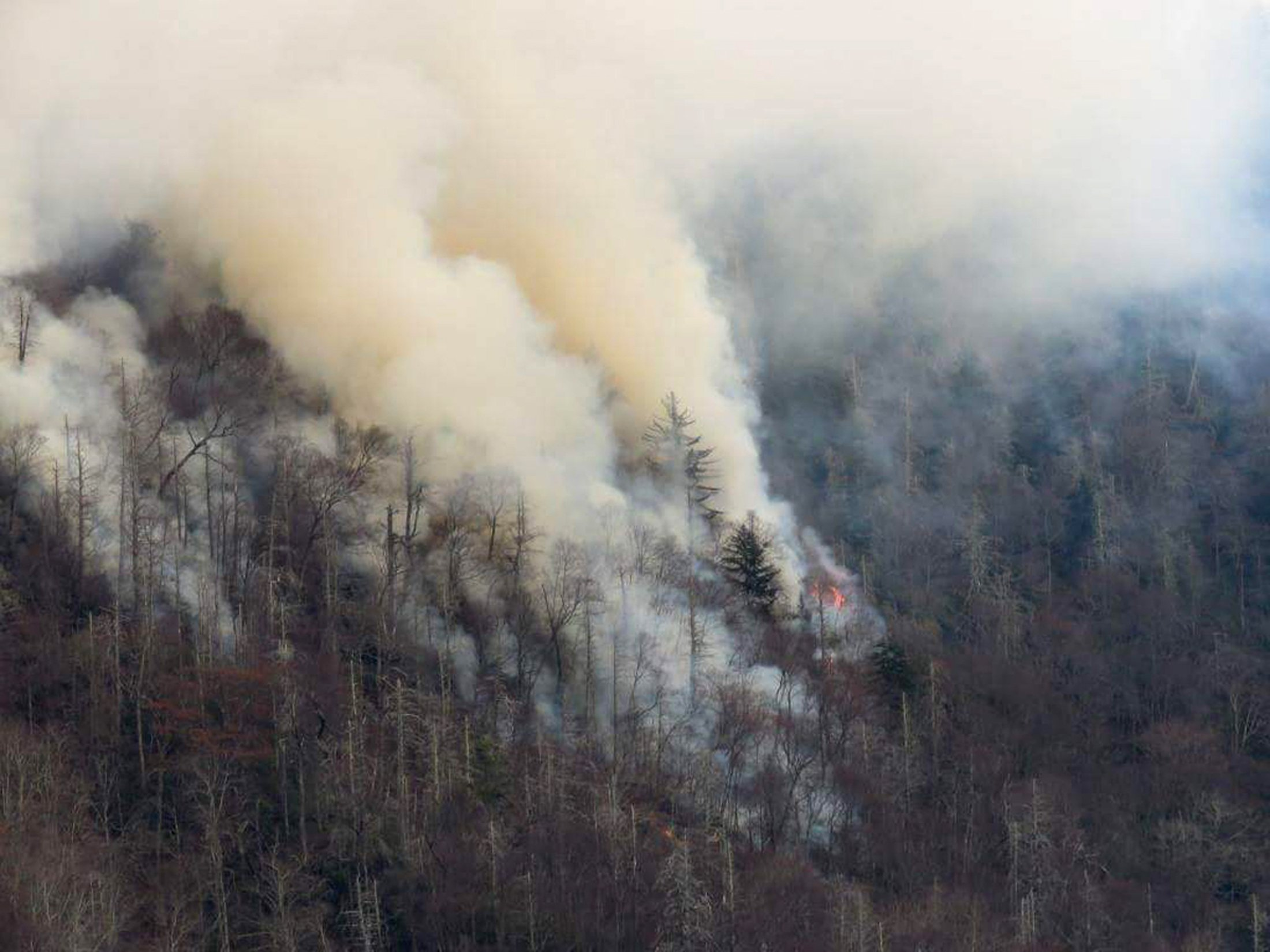 cheaper c13f4 241aa Dollywood employee finds burned Bible page after wildfires