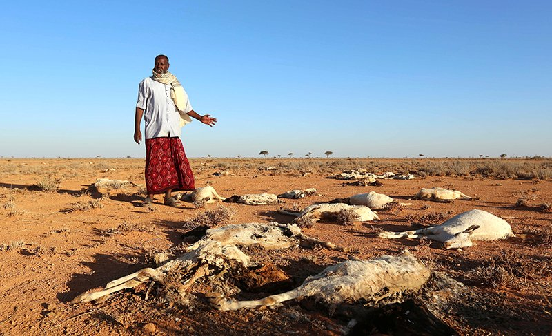 An internally displaced man looks at the carcasses of his goats and sheep in the outskirts of Dahar town of Puntland state in northeastern Somalia, on Dec. 15, 2016. Photo courtesy of Reuters/Feisal Omar