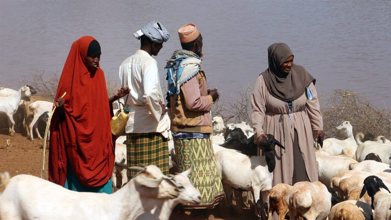 Somali herders water their livestock in northern Kenya, on the border with Somalia, on Feb. 13, 2019. Many Somali elders believe that female genital mutilation is a religious requirement and that their daughters should be cut to be accepted by Allah. RNS photo by Doreen Ajiambo