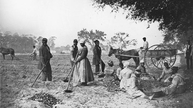Slaves plant sweet potatoes on the James Hopkinson plantation in South Carolina circa 1862. Photo courtesy of LOC/Creative Commons
