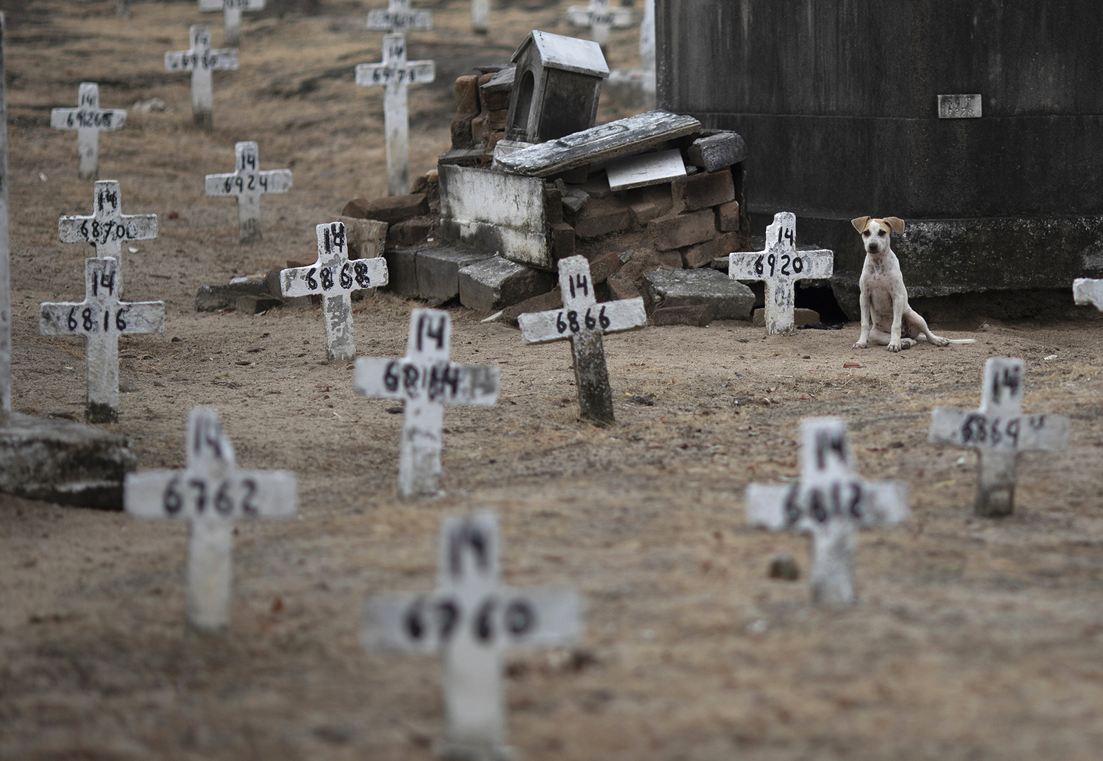 A dog sits among numbered crosses at the Iraja cemetery, where many COVID-19 victims are buried, in Rio de Janeiro, Brazil, Friday, Feb. 5, 2021. (AP Photo/Silvia Izquierdo)