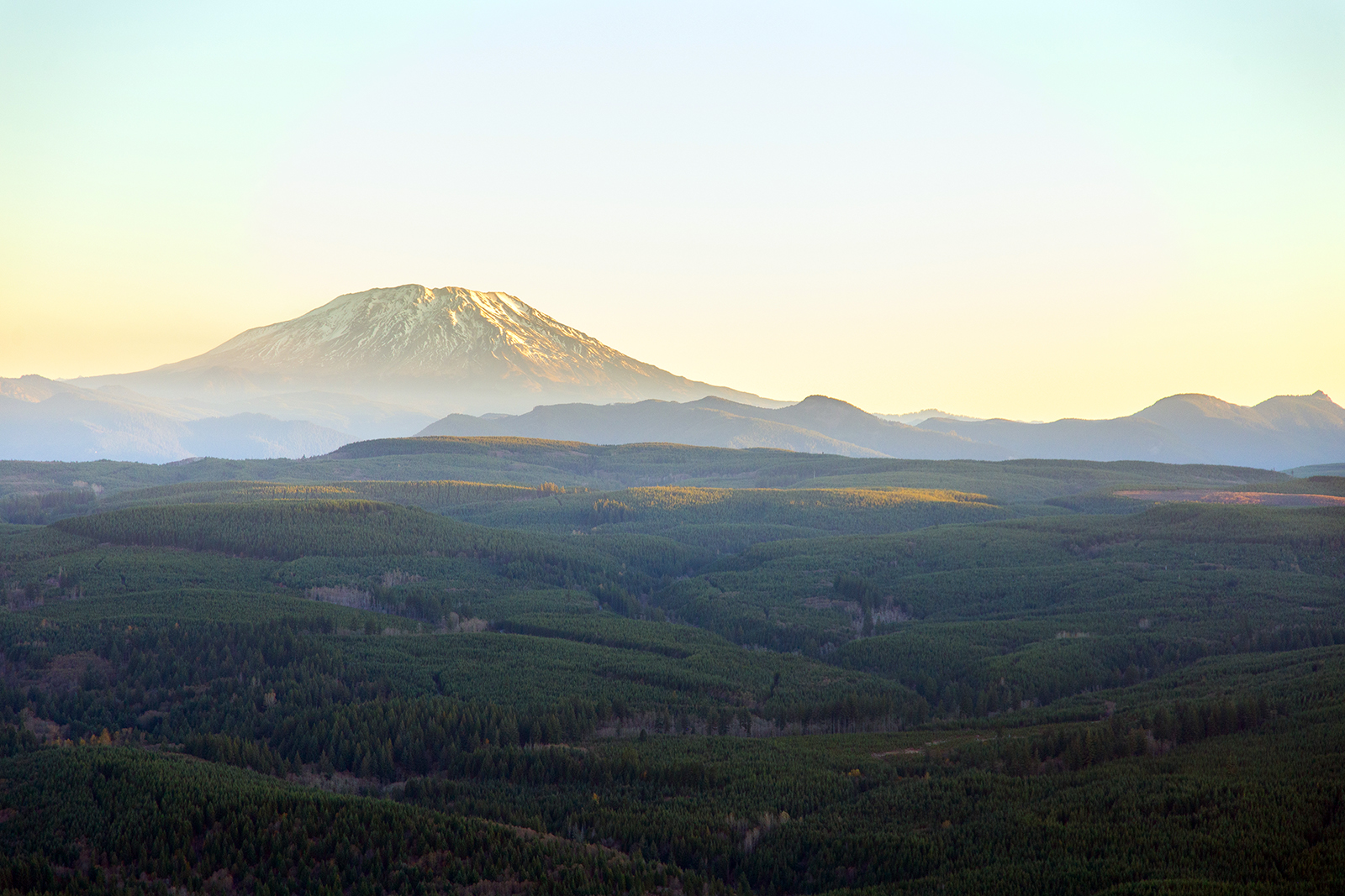 Mount Saint Helens, background, rises behind Bells Mountain forest in southern Washington. Photo by Abby Wilcox