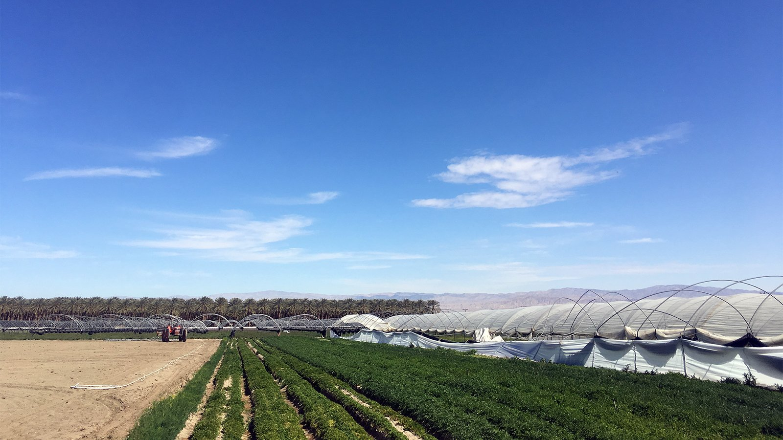 Farm fields in Thermal, California, in the Coachella Valley in Riverside County. RNS photo by Alejandra Molina