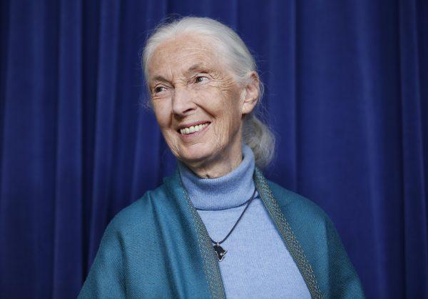 Esteemed Primatologist Jane Goodall Wins 2021 Templeton Prize