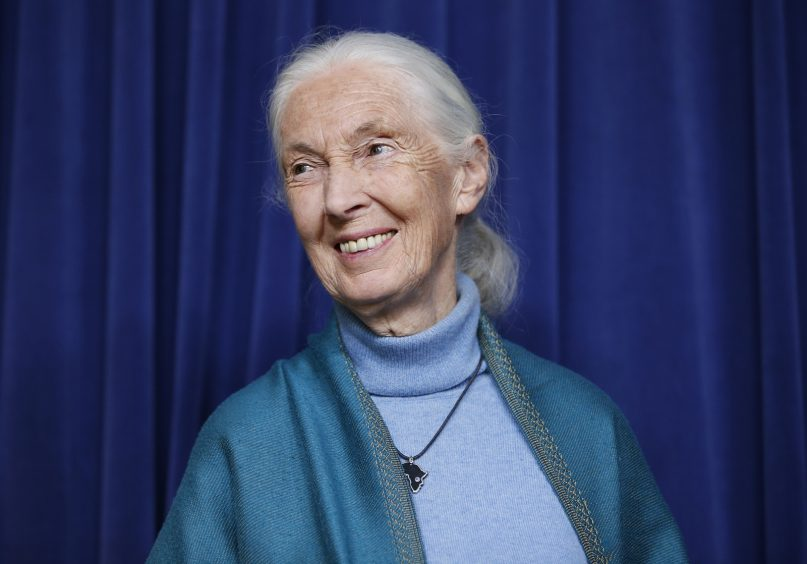 This April 3, 2019, file photo shows primatologist Jane Goodall being honored for her lifetime achievements at a ceremony on her 85th birthday in Los Angeles.  (AP Photo/Damian Dovarganes, File)