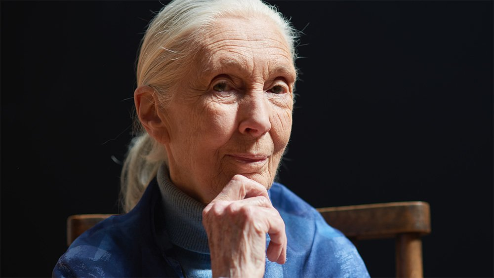 Templeton Price reicipient Jane Goodall. (Photo by Tim Cole/Templeton Prize)