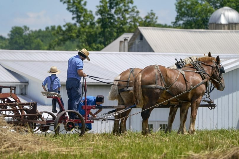 People in Amish country prepare a horse team to work on a farm in Pulaski, Pennsylvania, on June 23, 2021. The vaccination drive is lagging far behind in many Amish communities across the U.S. after a wave of virus outbreaks that swept through their churches and homes during the past year. (AP Photo/Keith Srakocic)