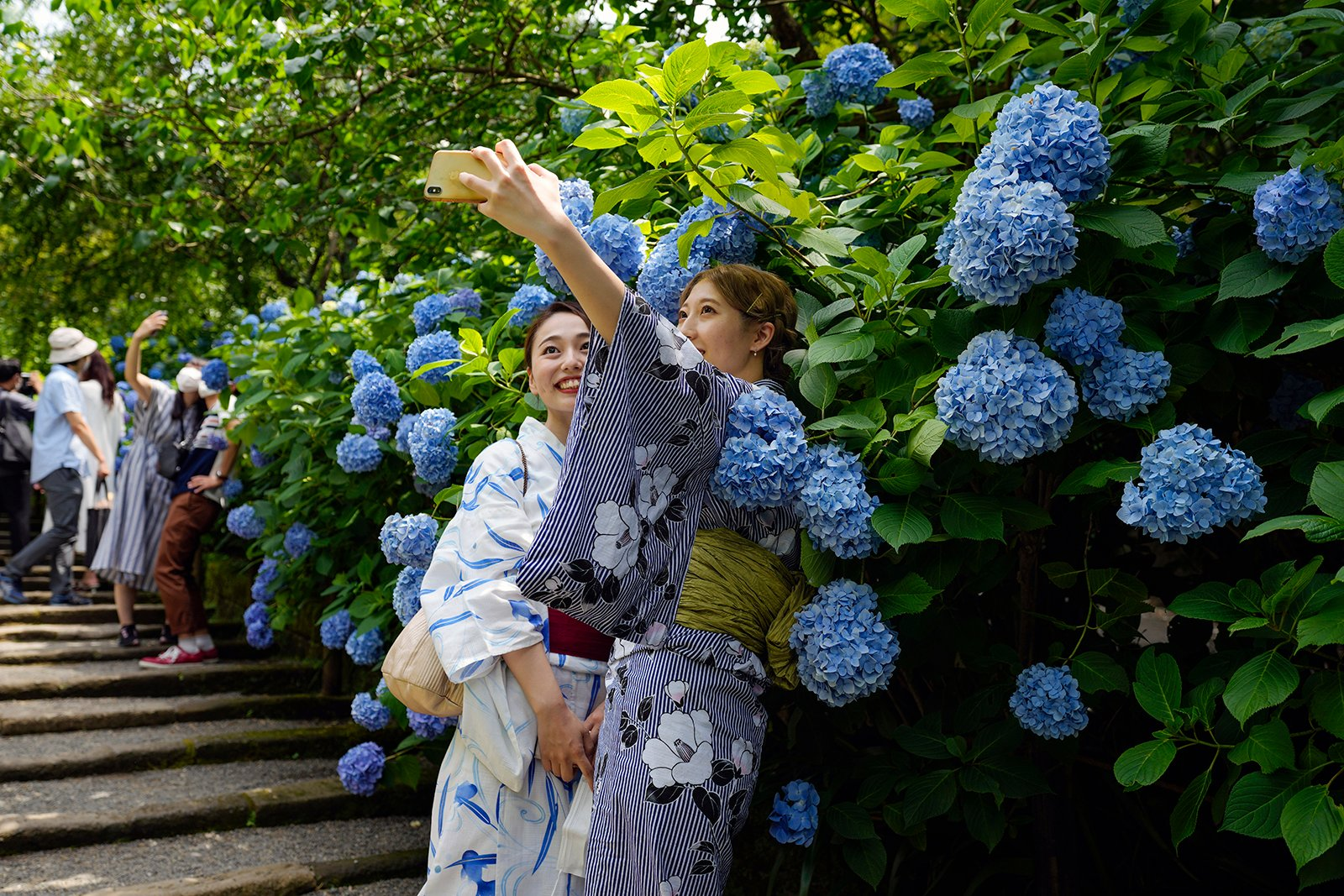 Visitors take pictures with blooming hydrangea flowers at Meigetsu-in Buddhist temple, Friday, June 11, 2021, in Kamakura, Japan, south of Tokyo. (AP Photo/Kiichiro Sato)